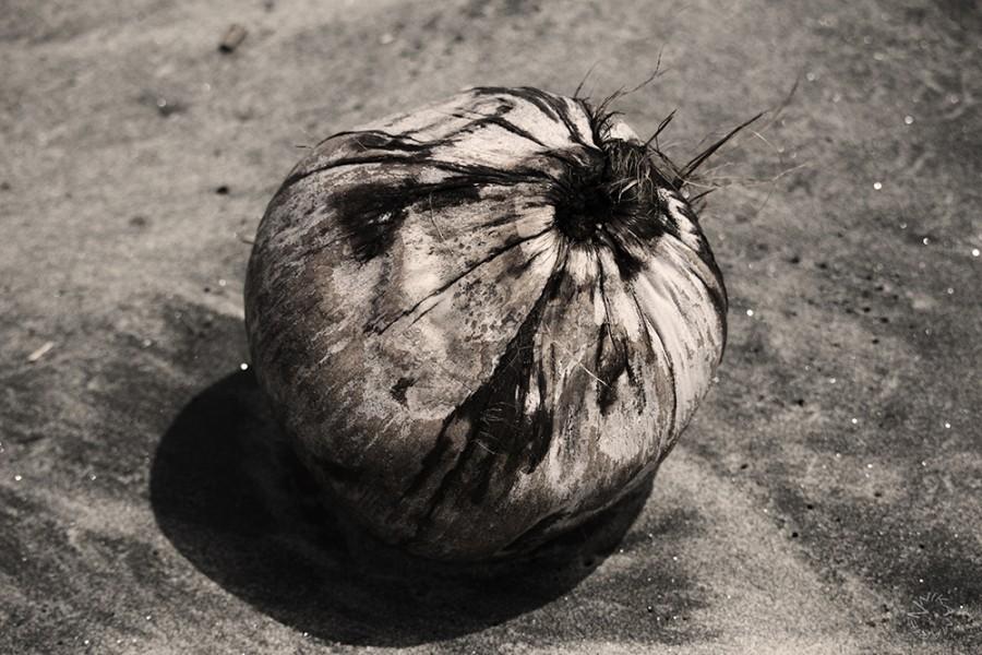 Coconut, Ecuador