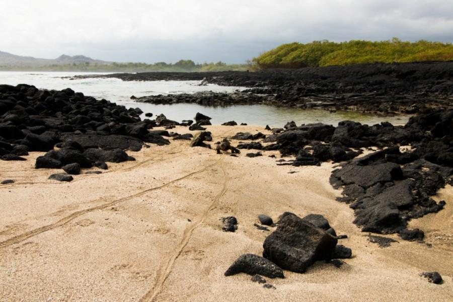 Galapagos Isabela Island