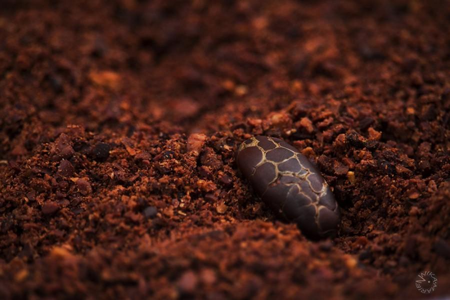 Cacao bean crashed, Ecuador