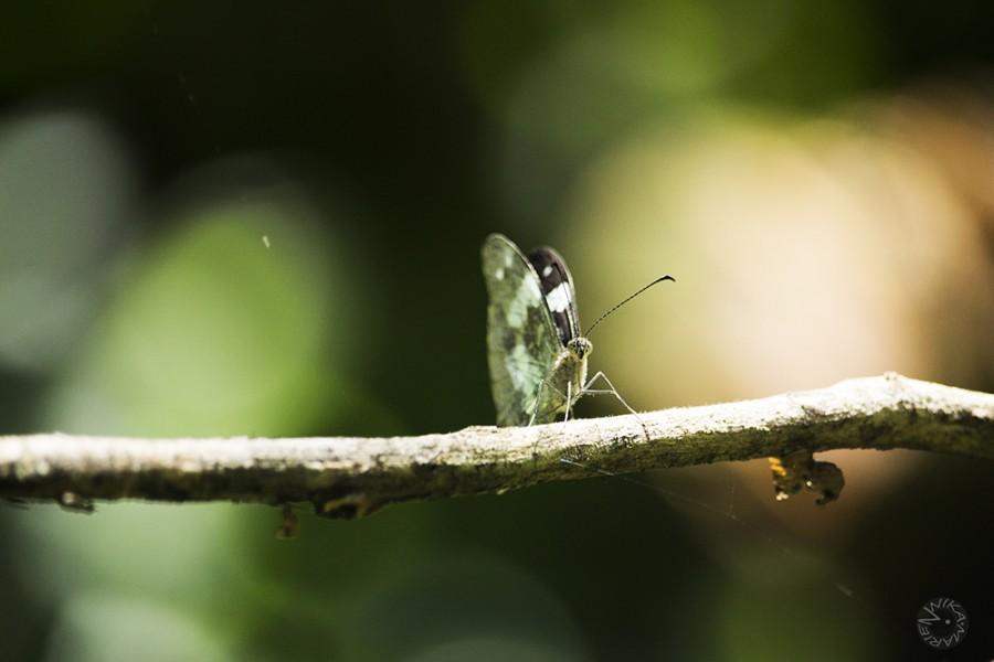 Butterfly Ecuador