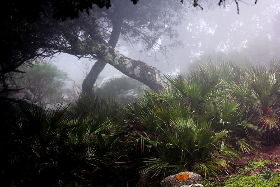 Biodiversity Hotspot, Bolonia, Spain