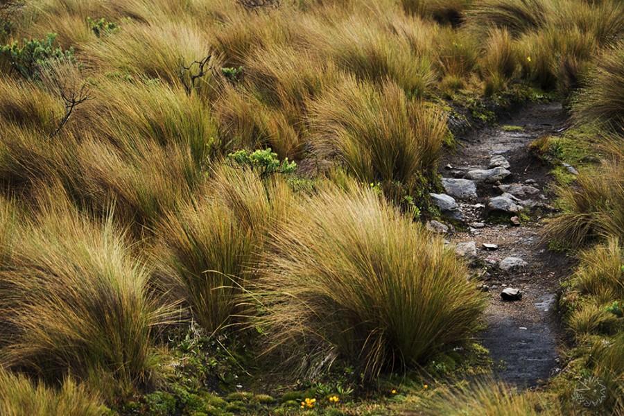 El Cajas Nationalpark, Ecuador