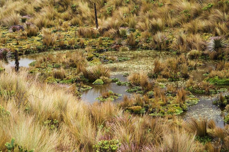 Nationalpark El Cajas, Ecuador
