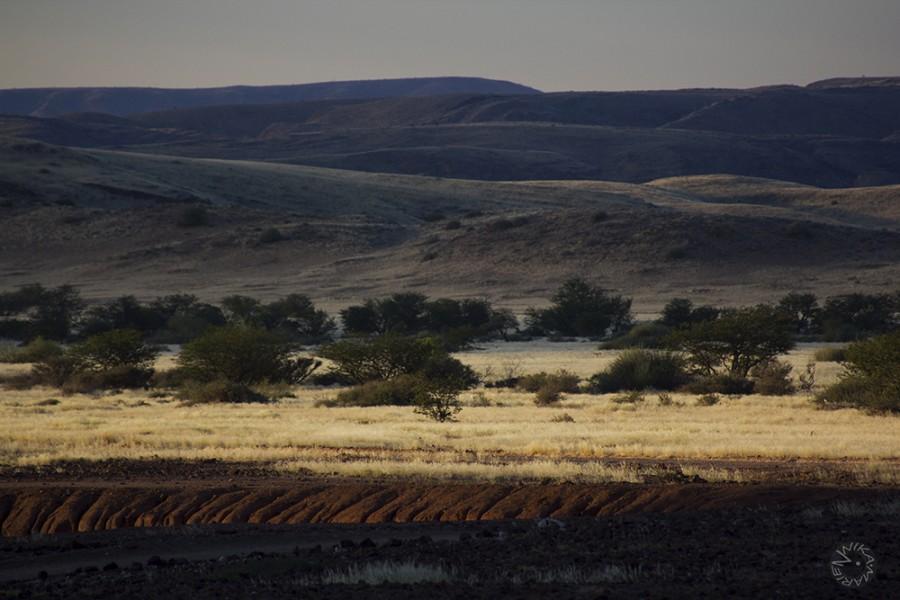 Namib Oasis, Namibia