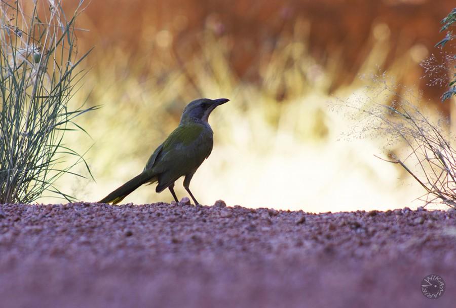 XXX Namibia Africa