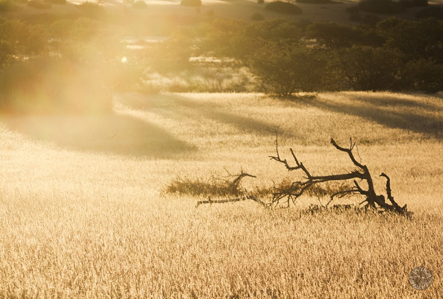 Palmwag, Kunene, Namibia