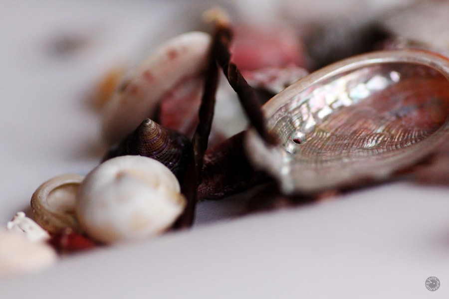 Mussels, Spain