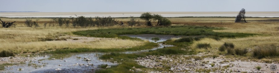 waterhole, Etosha, Namibia